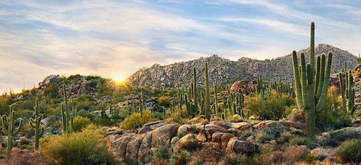 Scottsdale Desert 2