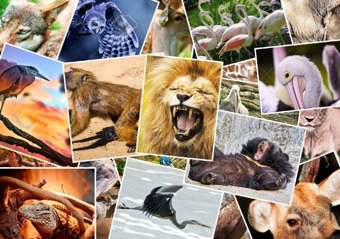Cover photo animal collage